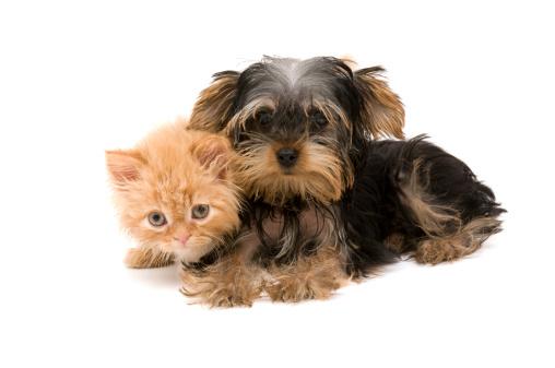 子猫「猫と犬」:スマホ壁紙(18)