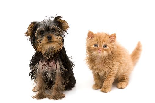 Kitten「猫と犬」:スマホ壁紙(18)