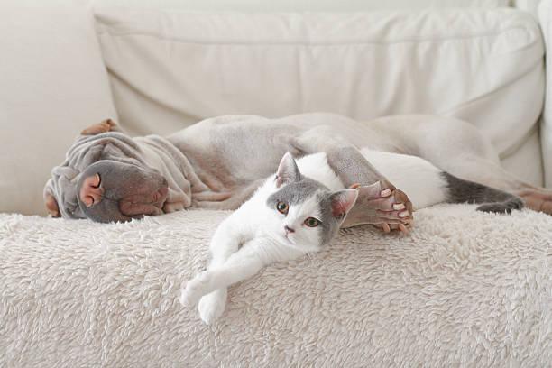 Cat and dog hugging on sofa:スマホ壁紙(壁紙.com)