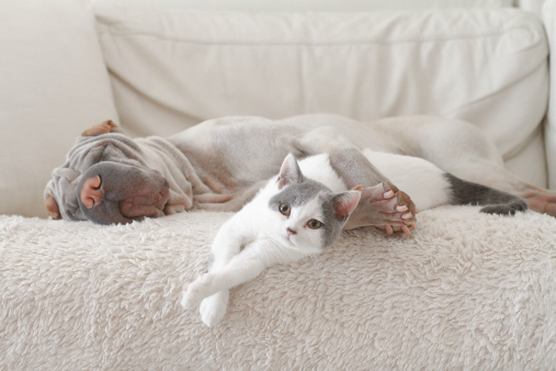 ペット「Cat and dog hugging on sofa」:スマホ壁紙(6)