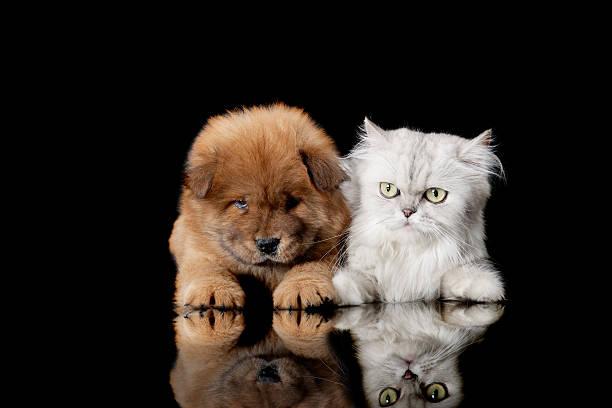 cat and dog:スマホ壁紙(壁紙.com)