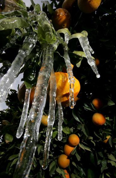 Orange - Fruit「Cold Snap Endangers California Citrus Crop」:写真・画像(1)[壁紙.com]