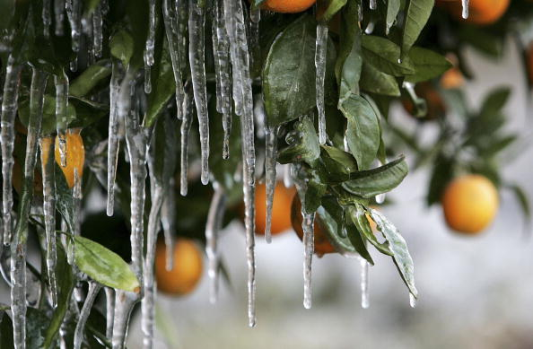 Frost「Cold Snap Endangers California Citrus Crop」:写真・画像(1)[壁紙.com]