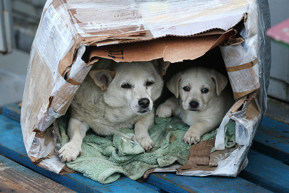 動物「Two Dogs In A Cardboard Dog House」:写真・画像(1)[壁紙.com]