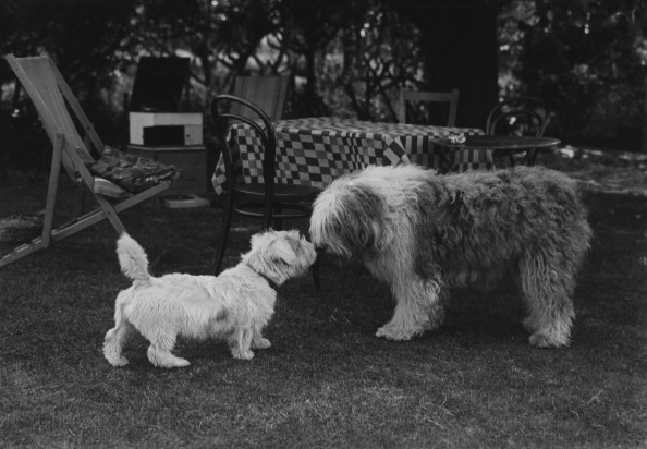 Nose「Two Dogs In English Garden」:写真・画像(12)[壁紙.com]