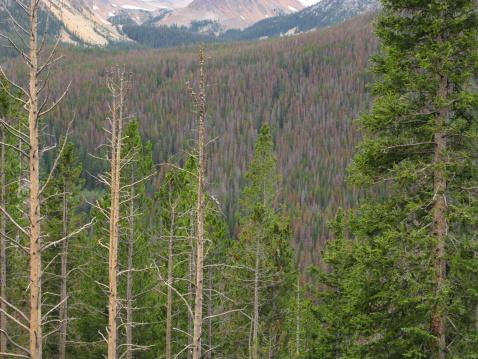 Beetle「Pine Beetle Damage Forest」:スマホ壁紙(18)