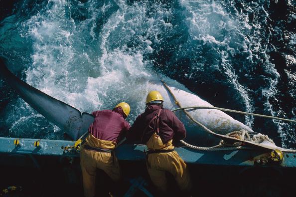 Whale「Japanese Whaling」:写真・画像(10)[壁紙.com]