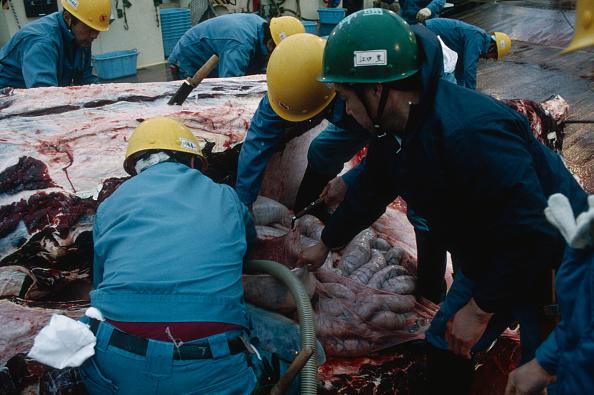 Japan「Japanese Whaling」:写真・画像(19)[壁紙.com]