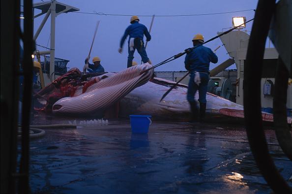 Japan「Japanese Whaling」:写真・画像(18)[壁紙.com]