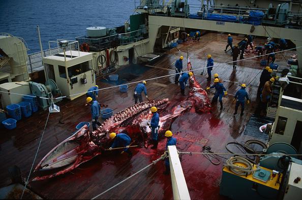 Japan「Japanese Whaling」:写真・画像(3)[壁紙.com]