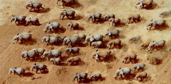 African Elephant「African elephant herd (Loxodonta africana),Kenya (Digital Composite)」:スマホ壁紙(12)