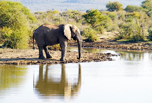 The Nature Conservancy「African elephant drinking at the waterhole in the Madikwe Game Reserve in South Africa」:スマホ壁紙(12)