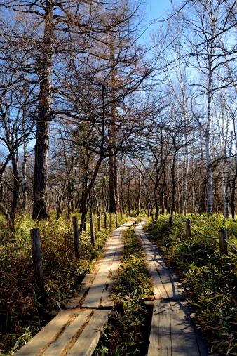 Nikko City「Senjogahara Plateau Nature Trail」:スマホ壁紙(2)