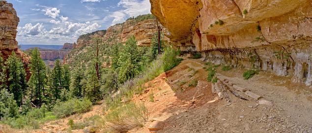 Kaibab National Forest「Cliff Springs Trail, North Rim, Grand Canyon, Arizona, USA」:スマホ壁紙(18)