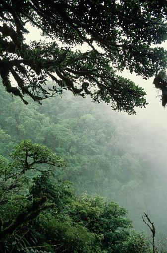 Montane Rainforest「Monteverde Cloud Forest」:スマホ壁紙(11)