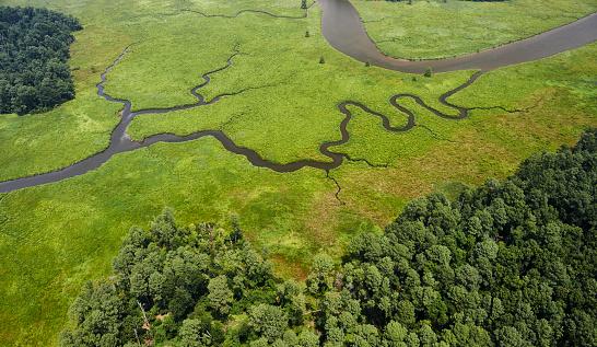 塩湖「USA, Virginia, Marshes of the Chickahominy River near the confluence with the James River」:スマホ壁紙(18)