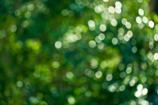 緑色「Leaves Unfocused」:スマホ壁紙(4)