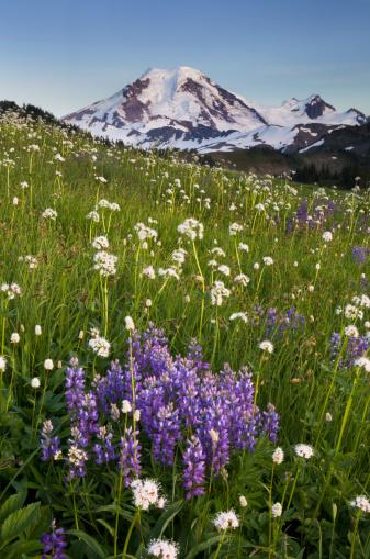 North Cascades National Park「Mount Baker wildflower meadows North Cascades」:スマホ壁紙(10)