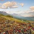チューガッシュ国定森林壁紙の画像(壁紙.com)