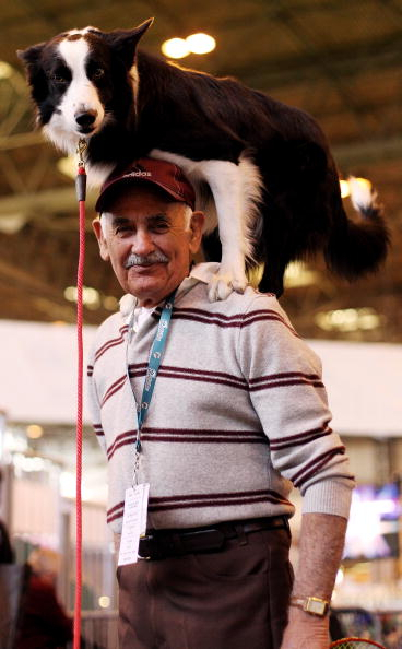 Dan Kitwood「Dogs And Owners Gather For 2010 Crufts Dog Show」:写真・画像(14)[壁紙.com]