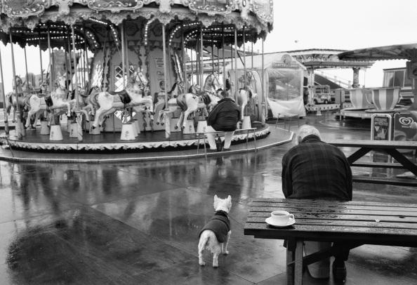 Tea Cup「Carousel In The Rain」:写真・画像(12)[壁紙.com]