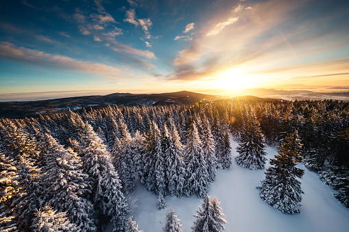 Slovenia「Winter Sunrise Above The Forest」:スマホ壁紙(10)