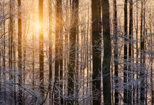 Great Smoky Mountains National Park「Winter sunrise through trees with snow」:スマホ壁紙(16)