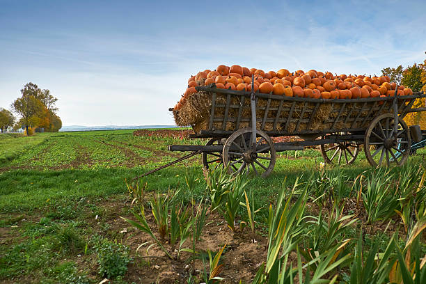 Germany, Kirchheimbolanden, harvested pumpkins on a cart:スマホ壁紙(壁紙.com)