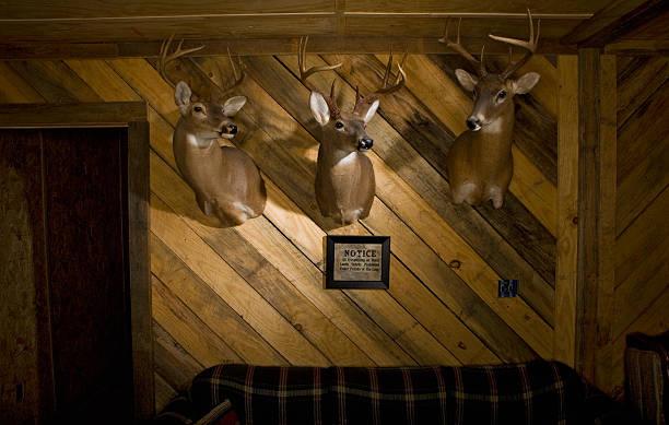 Three dear head mounted on a wooden wall in a den.:スマホ壁紙(壁紙.com)