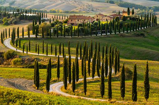 Cypress Tree「Winding lines of cypress trees highlight the road to Baccoleno, Asciano, Tuscany, Italy」:スマホ壁紙(18)