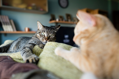 Kitten「Two cats resting on the top of a couch」:スマホ壁紙(19)