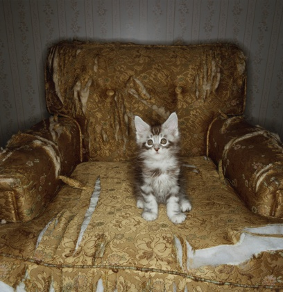 Mischief「Kitten Sits on Torn Chair」:スマホ壁紙(5)