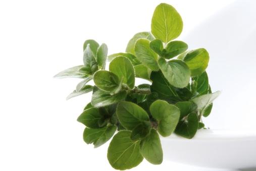 Oregano「Oregano (Origanum vulgare), close-up」:スマホ壁紙(7)