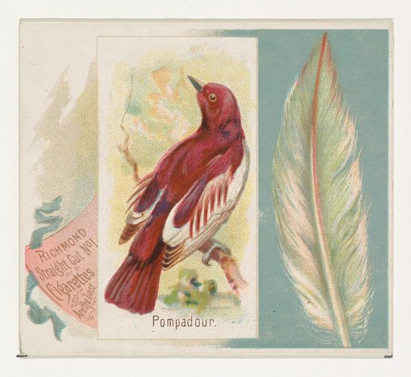 Songbird「Pompadour」:写真・画像(5)[壁紙.com]