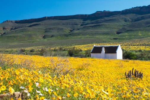 South Africa「Whitewashed cottage amongst the Spring wildflowers, Biedouw Valley, Clanwilliam, Western Cape Province, South Africa」:スマホ壁紙(17)