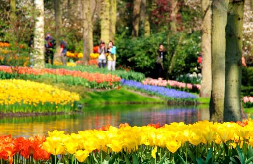 Keukenhof Gardens「Garden in springtime」:スマホ壁紙(9)