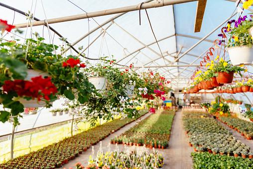趣味・暮らし「Plant nursery and greenhouse with potted plants and flowers」:スマホ壁紙(18)