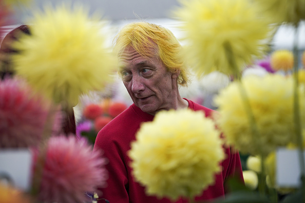 flower「Giant Vegetables At Harrogate Autumn Show」:写真・画像(6)[壁紙.com]