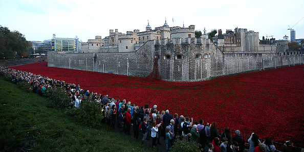 Oriental Poppy「Four Million People Are Expected To Visit The Poppies At The Tower of London」:写真・画像(9)[壁紙.com]