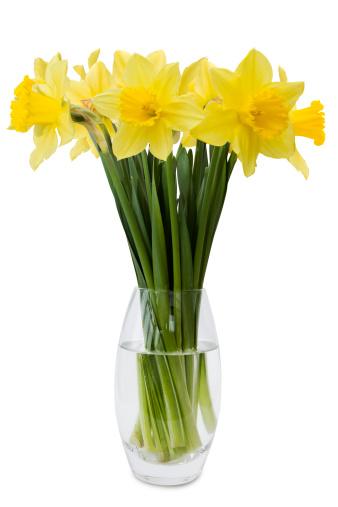 水仙「Daffodils 」:スマホ壁紙(15)