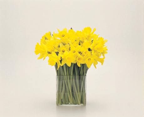 ラッパズイセン「Daffodils」:スマホ壁紙(7)