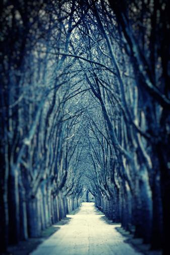 Avenue「Spooky Road of Bare Trees in Winter」:スマホ壁紙(15)