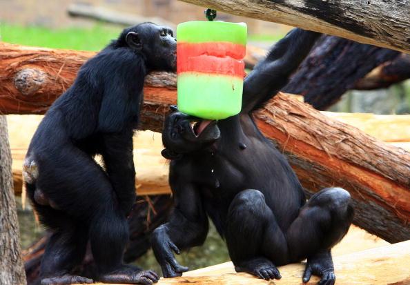 Brown Bear「Tarongas Animals Receive Christmas Treats」:写真・画像(13)[壁紙.com]
