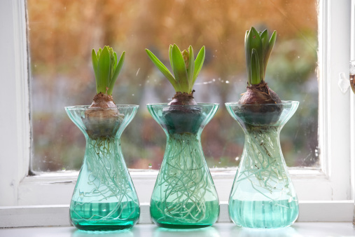 Plant Bulb「Growth」:スマホ壁紙(16)