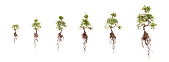 Planting「Growth」:スマホ壁紙(6)