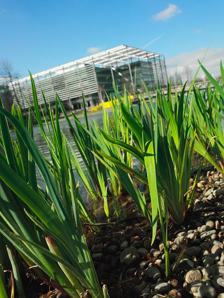 Surface Level「Waterside plants, Chiswick Business Park, London, UK」:写真・画像(2)[壁紙.com]