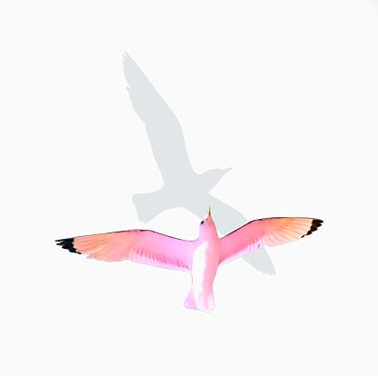 Birds「Kittiwake followed by grey shadow」:スマホ壁紙(9)