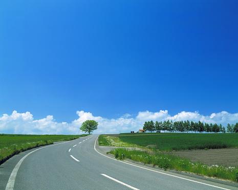 Grove「Road passing through green fields」:スマホ壁紙(19)