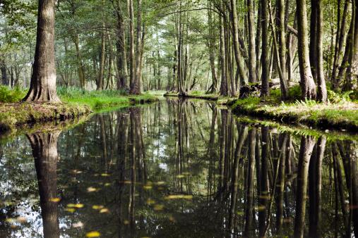 International Biosphere Reserves「River landscape with dark mystery forest.」:スマホ壁紙(8)