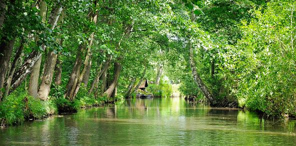 International Biosphere Reserves「River landscape in the Spreewald, southeast of the state of Brandenburg, Germany」:スマホ壁紙(5)